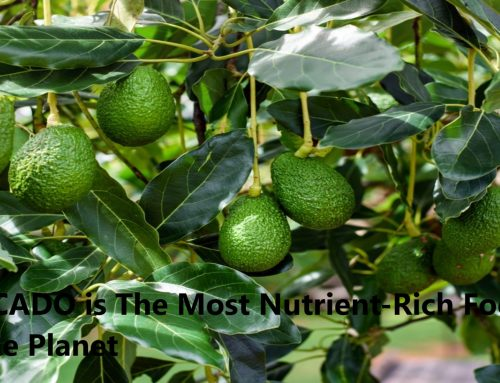 Benefits of Avocado | Most Nutrient-Rich Food on the Planet